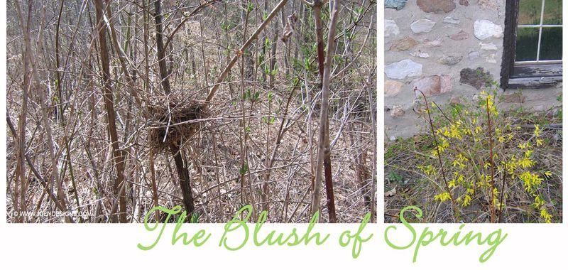 Blog:blush of spring