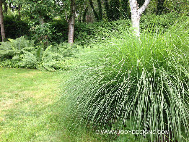 Big grass 1 w-©