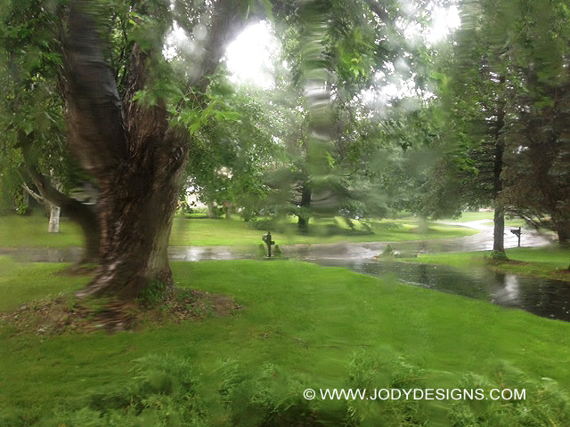 Rain big treew-©